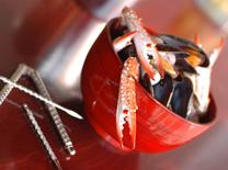 מיקס פירות ים בבלגו בר