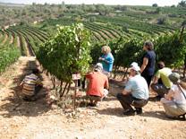 סיור שטח במסגרת אירועי דרך היין
