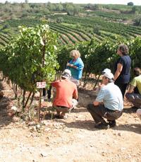 ביקור מודרך בכרמי היקב, מלווה בטעימות יין