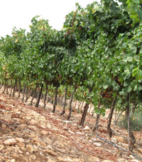 יינות היקב מחולקים על פי אזור הגידול של הענבים