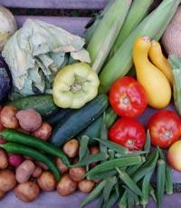 למלא את הקיבה במזונות בעלי תכולה קלורית נמוכה