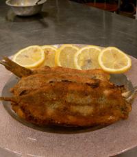 צורת פילוט הדגים קלה ללימוד ולביצוע