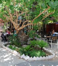 עץ התות נבנה בדיוק לפי הסטנדרטים של תנועת הירוקים