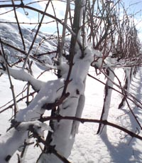 זהות ייחודית לתעשיית היין הישראלית