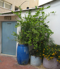 סיורי העמותה לתיירות תל אביב