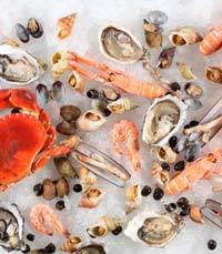 אנציקלופדיה של פירות ים